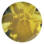 Perfect Daffodil Dinner Plate