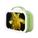 Perfect Daffodil Lunch Box