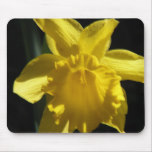 Perfect Daffodil Mouse Pad