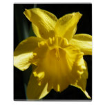 Perfect Daffodil Plaque