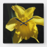Perfect Daffodil Square Wall Clock
