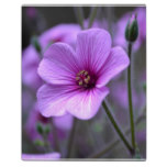 Perfect Geranium Plaque