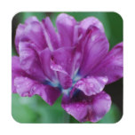 Perfectly Purple Parrot Tulip Beverage Coaster