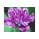 Perfectly Purple Parrot Tulip Canvas Print