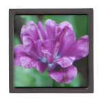 Perfectly Purple Parrot Tulip Jewelry Box