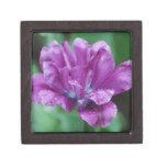 Perfectly Purple Parrot Tulip Keepsake Box