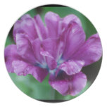 Perfectly Purple Parrot Tulip Melamine Plate
