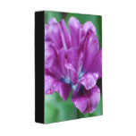 Perfectly Purple Parrot Tulip Mini Binder