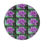 Perfectly Purple Parrot Tulip Paper Plate