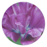 Perfectly Purple Parrot Tulip Plate