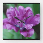 Perfectly Purple Parrot Tulip Square Wall Clock