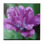 Perfectly Purple Parrot Tulip Tile