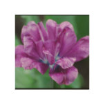 Perfectly Purple Parrot Tulip Wood Wall Art
