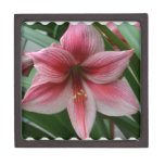 Pink Amaryllis Jewelry Box