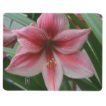 Pink Amaryllis Journal