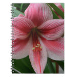 Pink Amaryllis Notebook