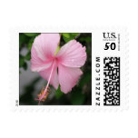 Pink Hibiscus Postage Stamp