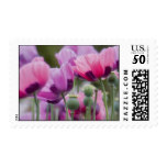 Poppy Field Postage Stamp