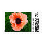 Poppy Flower Postage Stamp
