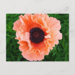 Poppy Flower Postcard
