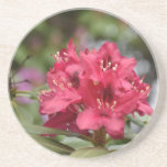 Pretty Blooming Red Rhododendron Blossom Coaster