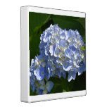 Pretty Light Blue Hydrangea Flowers 3 Ring Binder