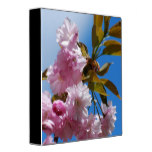 Pretty Pink Cherry Tree 3 Ring Binder