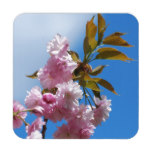Pretty Pink Cherry Tree Beverage Coaster