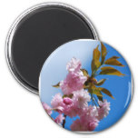 Pretty Pink Cherry Tree Magnet