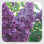 Pretty Purple Lilacs Square Sticker