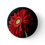 Red Gerber Daisy Pin