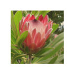 Red Protea Wood Wall Decor