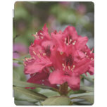 Red Rhododendron Bush in Bloom iPad Smart Cover