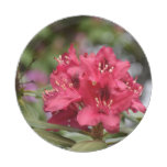 Red Rhododendron Bush in Bloom Paper Plate