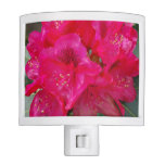 rhodendendron-3.jpg night light