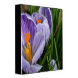 Striped Crocus 3 Ring Binder