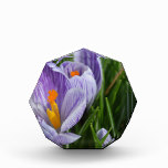Striped Crocus Acrylic Award
