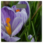 Striped Crocus Bathroom Scale