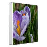 Striped Crocus Binder