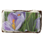 Striped Crocus Brownie
