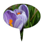 Striped Crocus Cake Topper