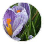 Striped Crocus Ceramic Knob