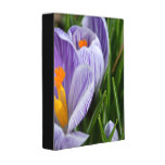 Striped Crocus Mini Binder
