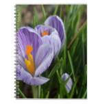 Striped Crocus Notebook