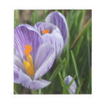 Striped Crocus Notepad