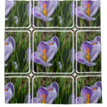 Striped Crocus Shower Curtain