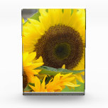 Sunflowers in Bloom Award