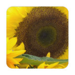 Sunflowers in Bloom Coaster
