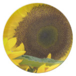 Sunflowers in Bloom Dinner Plate