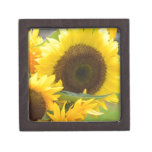 Sunflowers in Bloom Gift Box